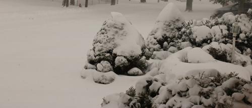 snow_fresh