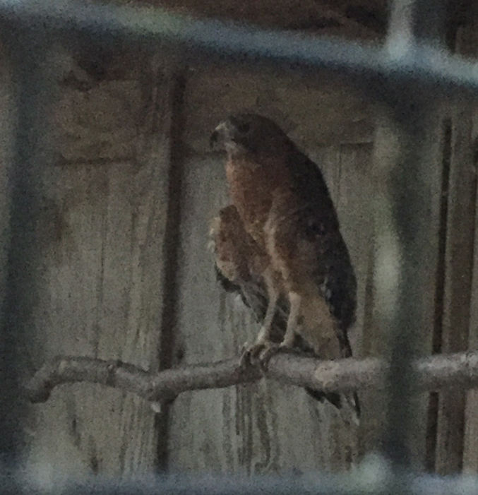 owl_refuge