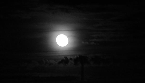 wolf_moon_1_12